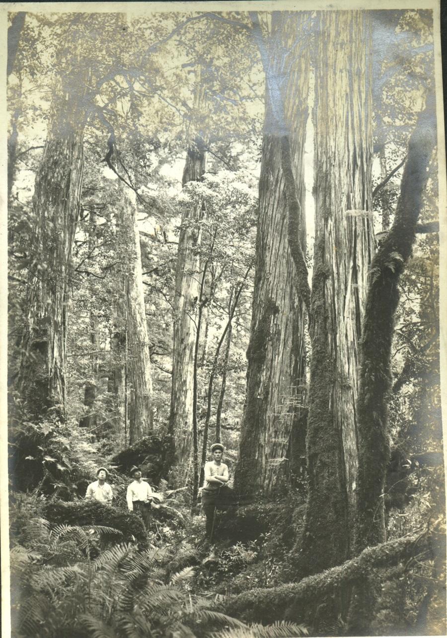 太平山歷史照片