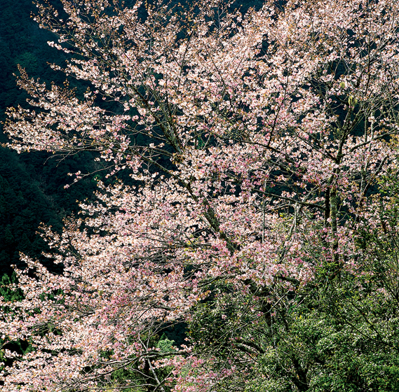 Taipingshan National Forest Recreation Area-Seasonal Recommendations